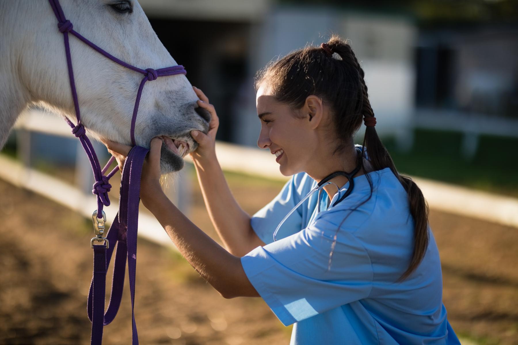 veterinary solutions
